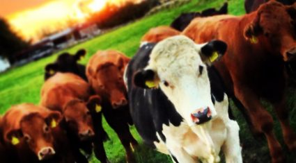 2015 is a 'critical year' for farm payment applications – Downey