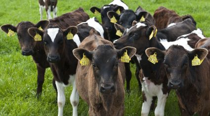 How to control dairy breeding costs
