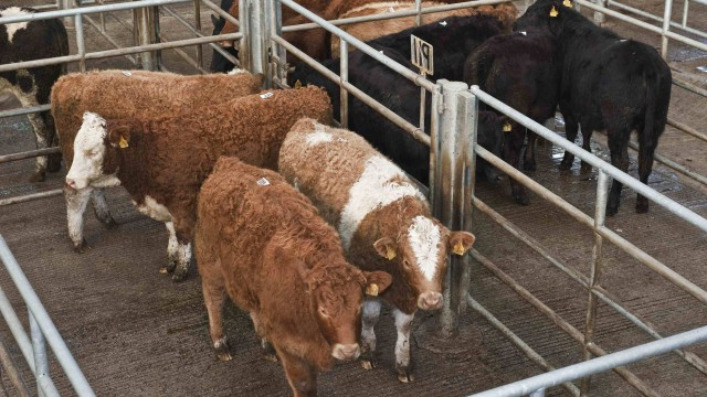 Cattle Marts: Delayed grass growth takes its toll on the store trade