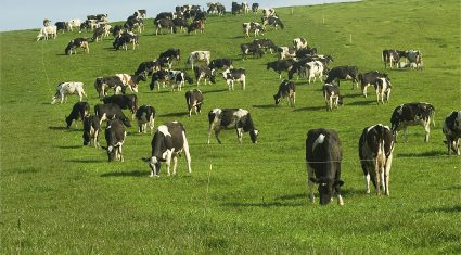 'Low dairy prices would suit New Zealand farmers but not European'