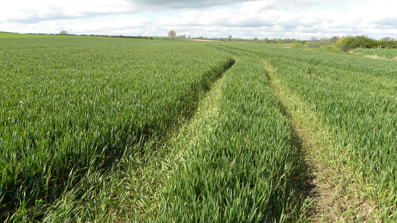 'Tillage farmers can look forward to a positive grain yield this year'