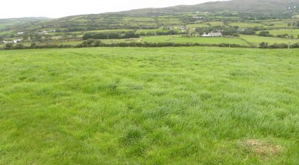 Is Ireland facing a grass famine and feast situation?