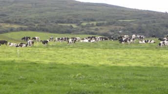 We did not pass on the full impact of dairy markets last year – Dairygold