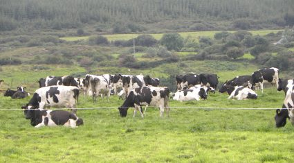 Teagasc dairy expansion service to be launched next month