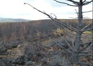 Fire service warns of heightened risk of gorse fires with current weather