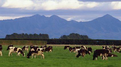 Fonterra revises its milk forecast downwards