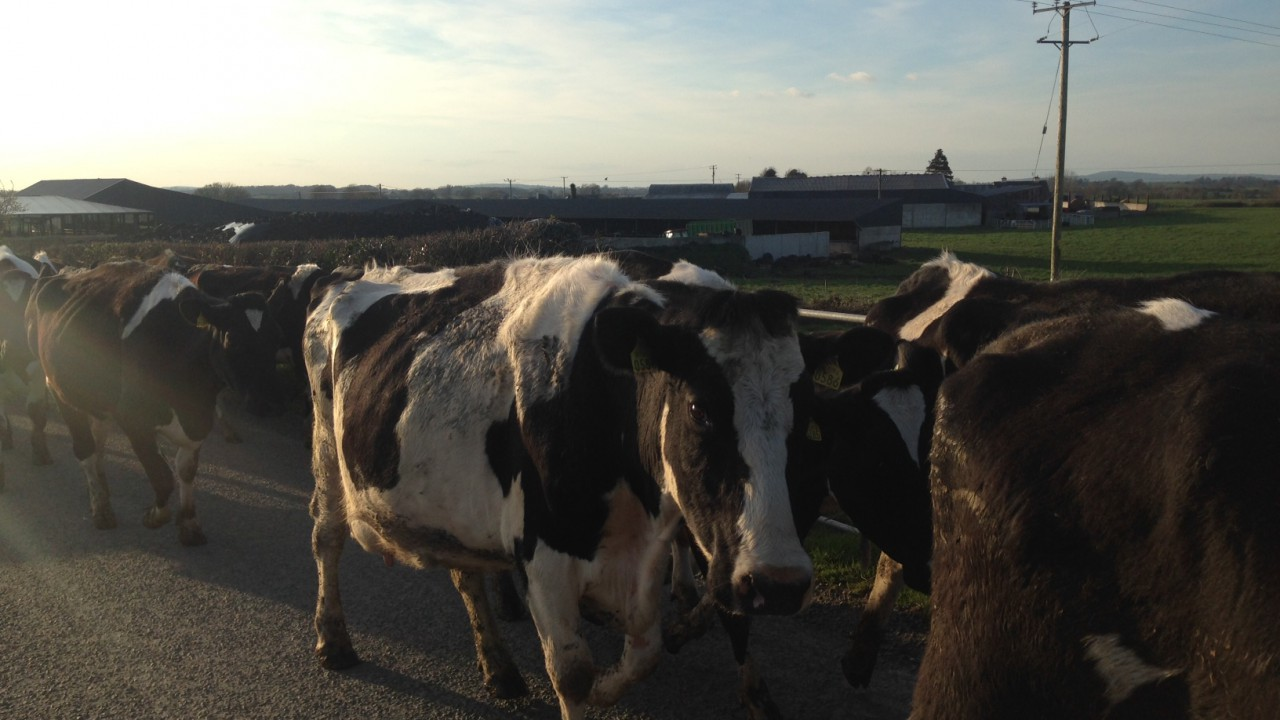 'We are not in the business of supporting inefficient dairy farms'
