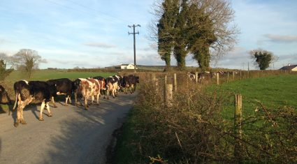 Who in Europe will challenge Ireland in milk production?