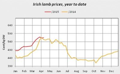 irish lamb prices