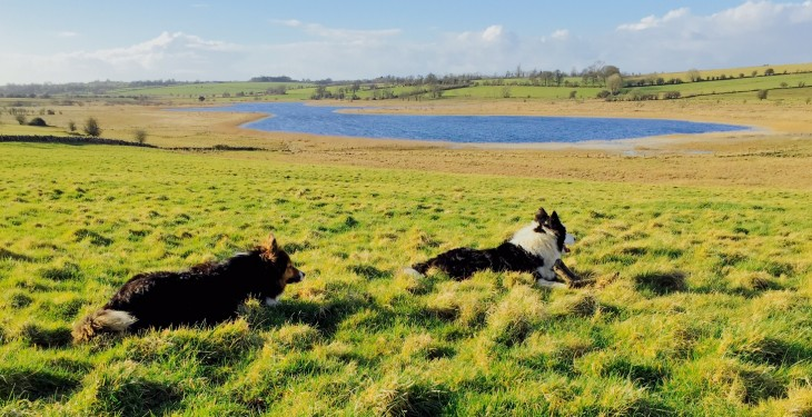 Initial outlook for Easter weekend will be dry and sunny – Met Eireann