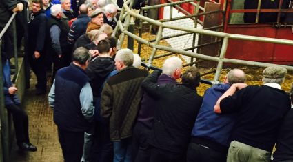 Northern cattle buyers warned of risks when buying southern cattle