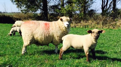 'Spring lambs making €100 over the weight this week'