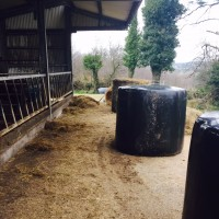 silage in yard