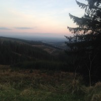 Terms of reference for Leitrim forestry study published