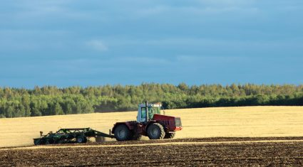 Strengthening futures' market could encourage last season's wheat to be stored