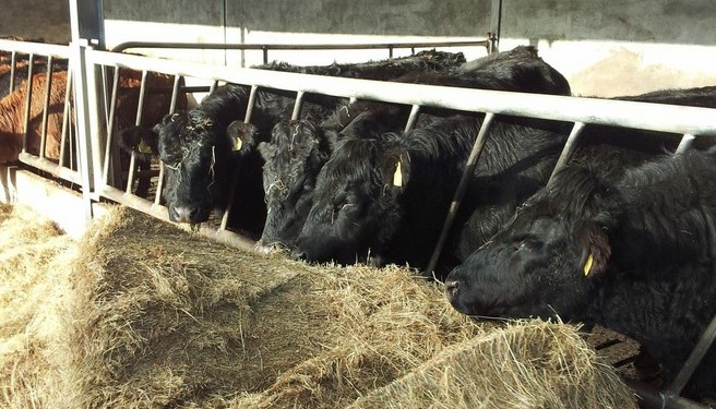 'Alternative feeds – some farms have feed costs 60% higher than the average'