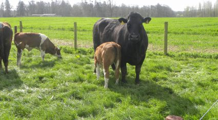 Beef farmers are optimistic about the future despite prices and profits