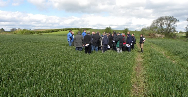 Latest research findings to be presented at crops open day
