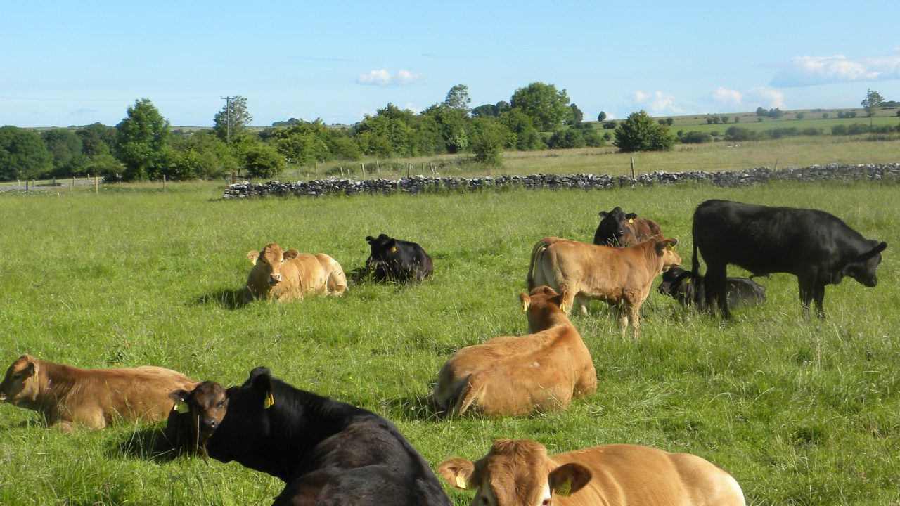 Beef farmers have no interest in partnerships, report shows