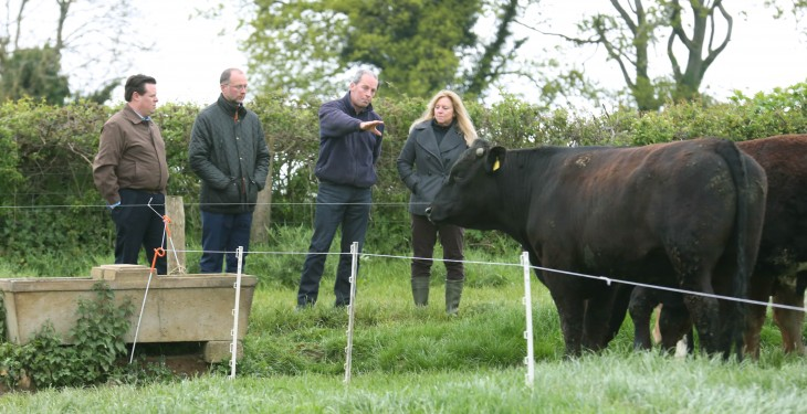 Irish beef is a hit with US distributors and food writers – Bord Bia