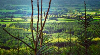 Coveney emphasises critical role of forestry at climate change meeting