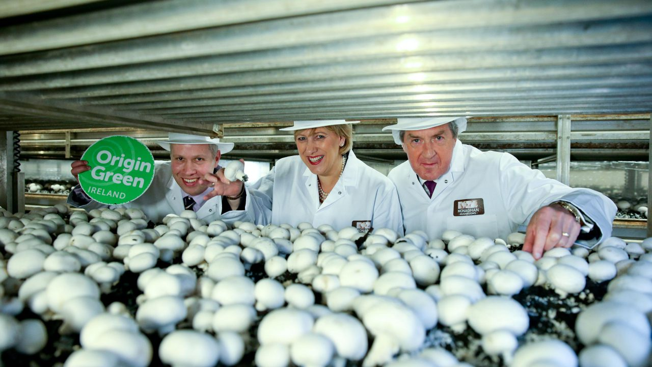 Rainwater and wind turbines drive sustainability at Monaghan Mushrooms