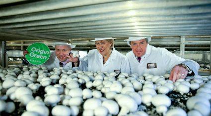 Rainwater and wind turbines drive sustainability at Monaghan Mushrooms