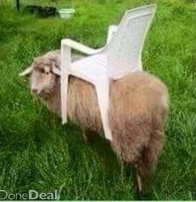 Ride-on lawnmower sheep