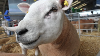 Video: All the highlights from day 3 of Balmoral Show