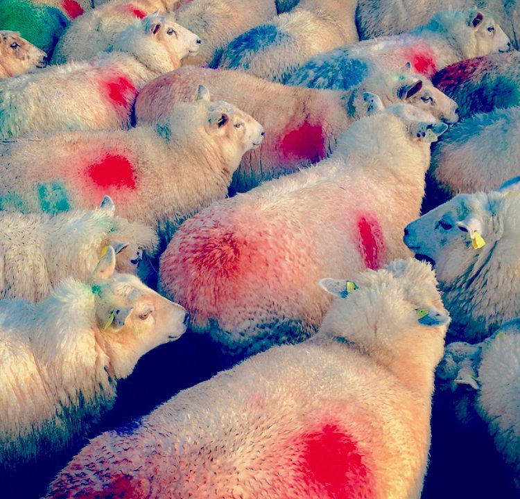Ireland has produced a lot more sheep meat this year