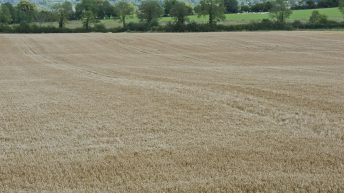 'Favourable crop conditions in Ireland; EU crops above average'