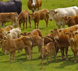 CAP: Ag committee told 'worthwhile' scheme needed