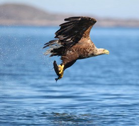 23 white-tailed eagle chicks arrive in Munster as part of wildlife reintroduction project