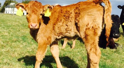 Over 3,200 farmers apply for BVD compensation in 2014 (payments to commence shortly)