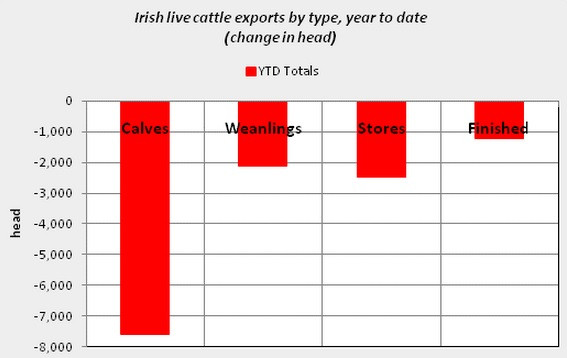 calf exports ytd