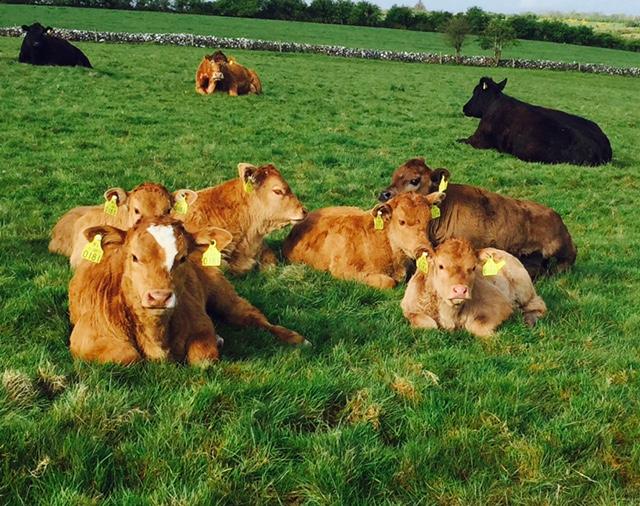 Department announces 2016 farmer BVD supports