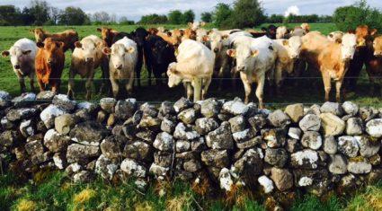 Beef genomics programme deadline extended