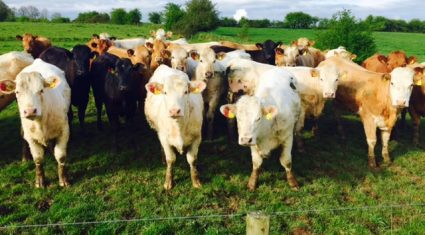 UK beef farmers look to positive summer for cattle prices