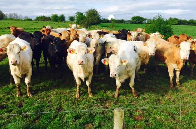 Higher UK beef imports despite lower Irish supplies