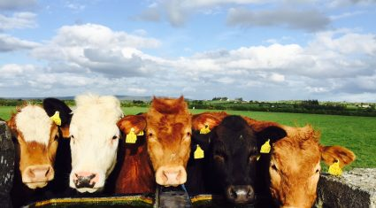 Average farm incomes up 6% in 2014 (unprecedented high in dairying)
