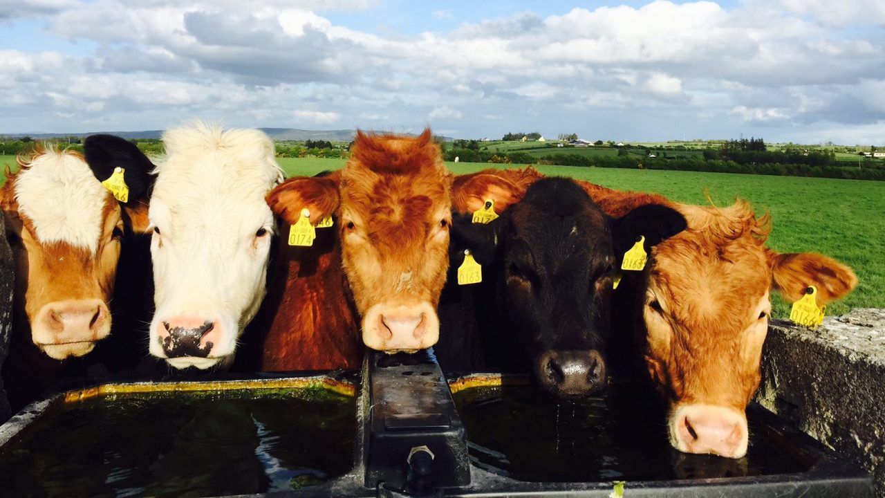 Top tips for conserving water on farms