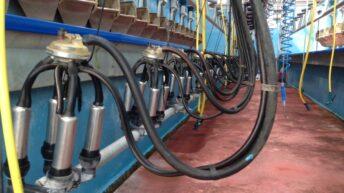 Ornua boss hopeful returns to dairy farmers will pass 30c/L