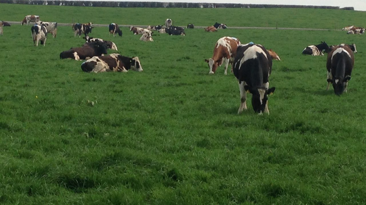 Learn how to do a simple dairy farm cash flow budget at upcoming Teagasc walks