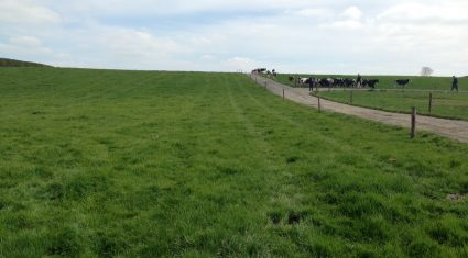 'Every tonne of grass utilised increases net profit by €161/ha'