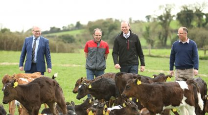 130,000 extra calf births so far this year is 'positive' says Coveney