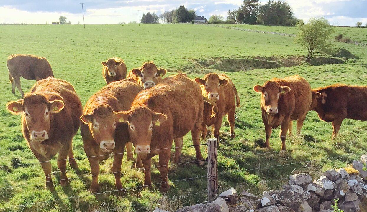 'Disease reduces profits' – how to ensure good dairy herd health