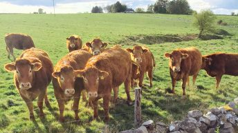 Beef quotes jump by 5c/kg as cattle numbers continue to tighten