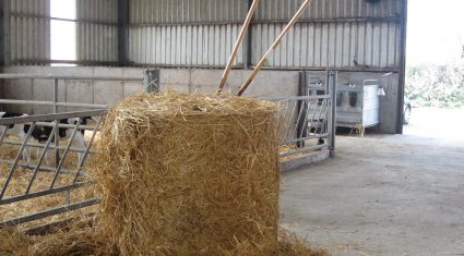 Hay and straw in good demand as farmers house stock – Straw makes €8-15/bale