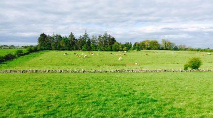 Farmers reminded on deadline for Scottish Derogation