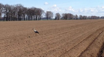 Farming opportunities abound in western Poland